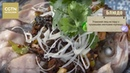 Учанский лещ на пару с сушеными листьями горчицы Age0