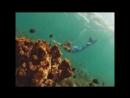 33 летняя Ханна Фрейзер работает русалкой в аквариуме города Сиднея это работа ее мечты