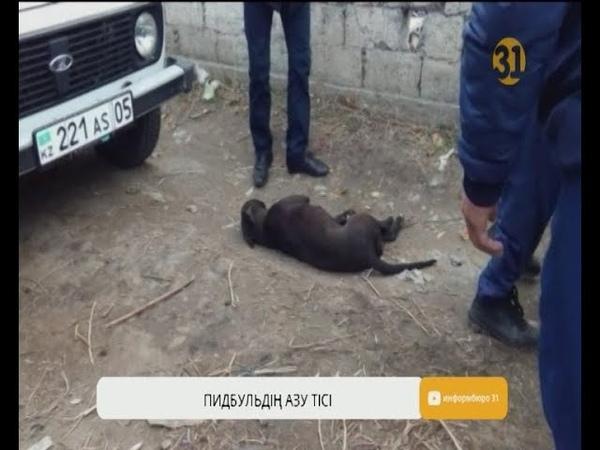 Алматы облысында екі пидбуль жеті жасар баланы талап бала қайтыс болды