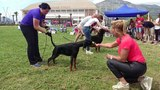 ANIMA VERO Barbarossa Severina - Puppy Club Winner Adriatic Cup 2018