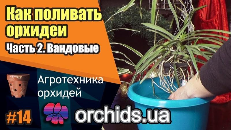 Как поливать орхидеи Часть 2 Как поливать вандовые Vanda