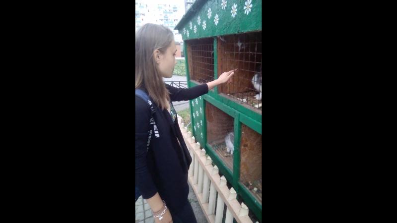 Кролики*-*