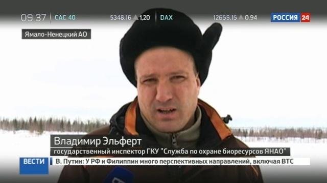 Новости на Россия 24 • Вахтовиков бросили без еды в окружении белых медведей
