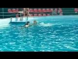 Плавание с дельфином?