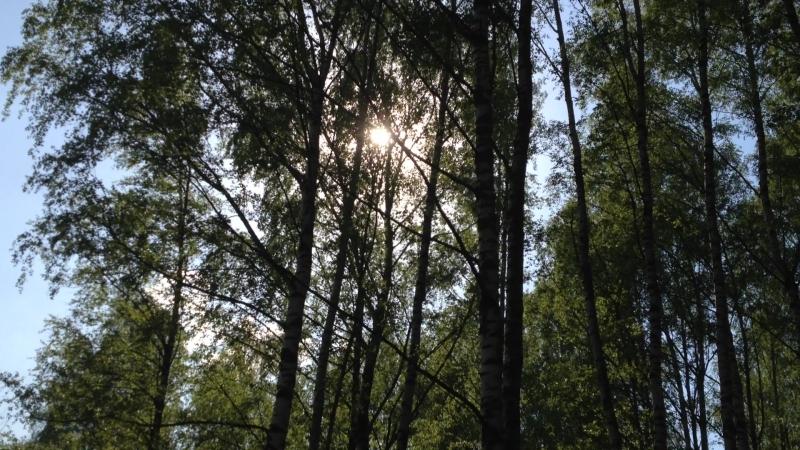Лес в Горелово. ( Юг СПБ) Черта.