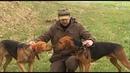 Белорусский гончак кафедра охотоведения охотовед.pw