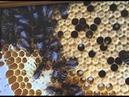 Пчеловод Подданный Его Императорскому Величеству