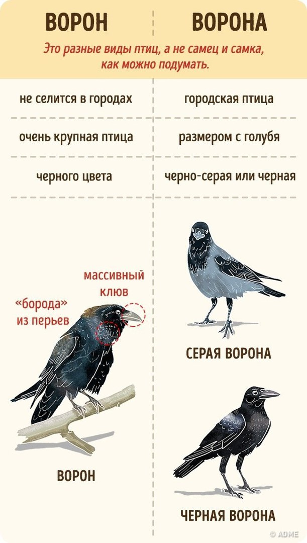 https://pp.userapi.com/c845018/v845018791/76c5f/ru1kNaWKjdc.jpg