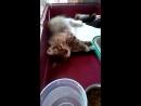 07 04 18 Вот так спит мамулЬка Стеша Чрез каждые минут 5 10 мощно вздрагивает аж подкидывает её и котята в разные стороны
