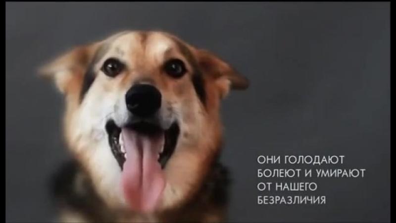 Социальная реклама (бездомные животные).mp4