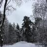Olgan video