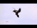 Freedom - VALDI SABEV (1080p)