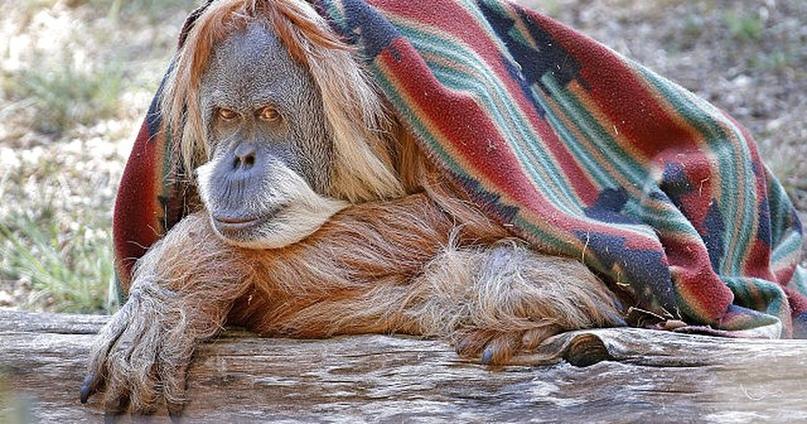 #ПЯТЮНЯ: 5 Умнейших животных в истории