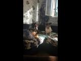 Гуфи и Боря в поисках дома