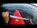Заплыв шмеля на реке Сходня
