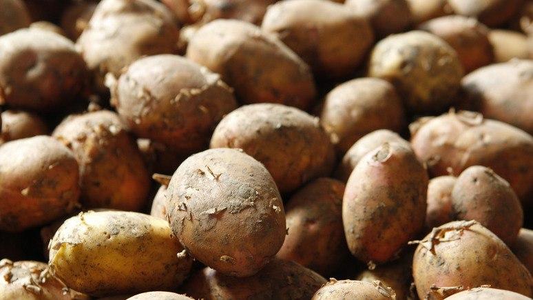 Россельхознадзор запретил ввоз картофеля из Египта