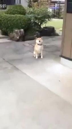 Good boy / хороший мальчик