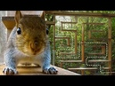 Can Squirrels Solve Mazes?   Earth Unplugged