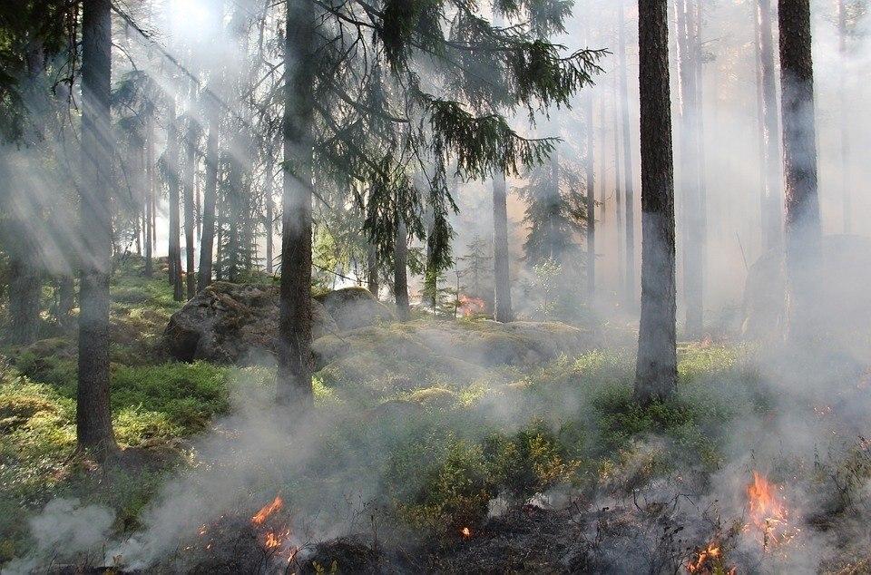 Чрезвычайная пожарная опасность ожидается в лесах Томской области в ближайшие дни