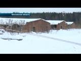 Сбили с ног и загрызли- Видео нападения стаи бродячих собак на 19-летнего парня в Истре.mp4