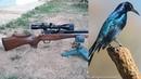 Control de plagas - pest control (rifle pcp daystate huntsman hr cal .22)
