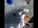 Керлинг на рыбалке. Видео прикол