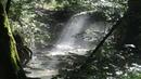 Как найти воду в лесу Методика поиска Подготовка воды