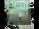 Художник объединяет тени с рисунками (6 sec)