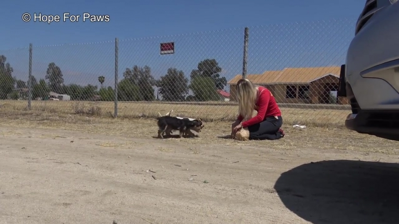 STOP DUMPING DOGS IN THE DESERT! WTH is wrong with people