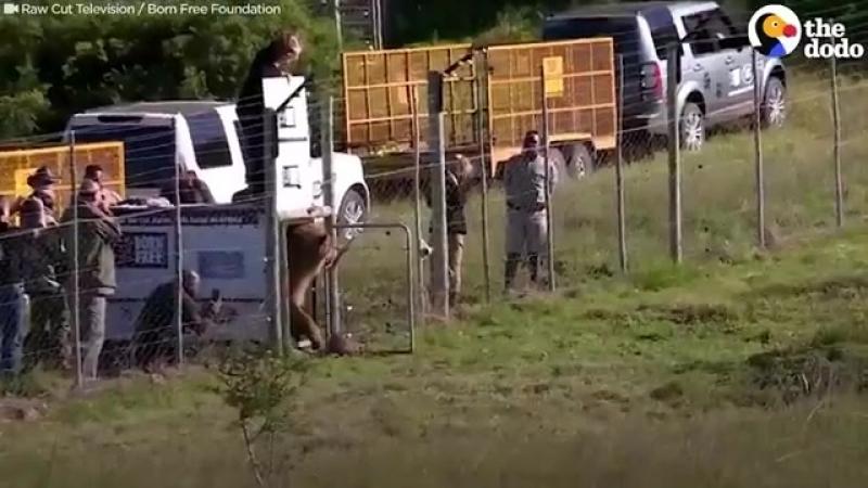 Эмоции животных, которых освободили из цирка