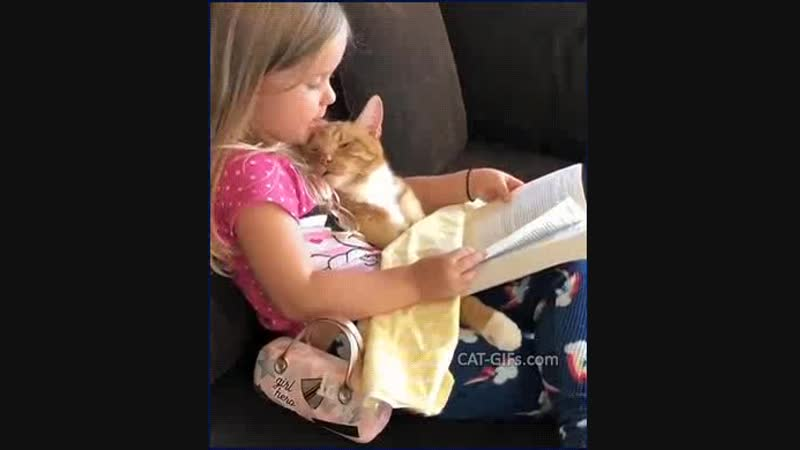 A good night story for the cat