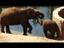 слоненок в московском зоопарке