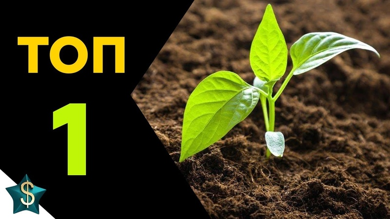 ✅ ТОП БИЗНЕС ИДЕЯ выращивание из семян / БИЗНЕС В ДЕРЕВНЕ