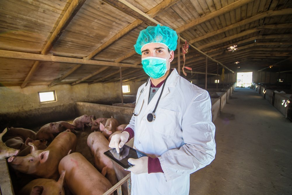Что такое заболевание свиного гриппа?