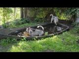 Скай и Туули ,водные процедуры