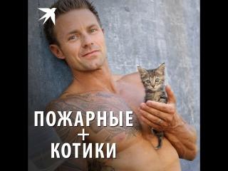 Пожарные + котики = огненный календарь