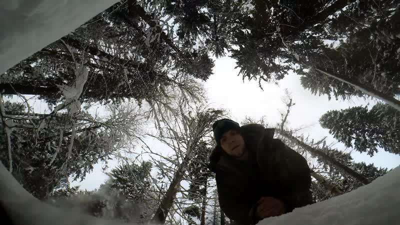 Таинственный лес: Январская сойка