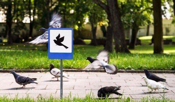 Миниатюрные дорожные знаки для крошечных жителей Вильнюса.