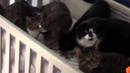Miao Miao coub