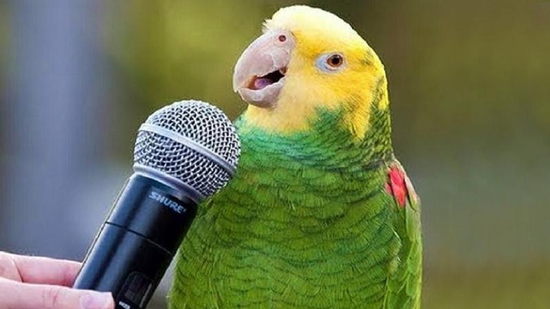 Funny Birds Sing, Dance Imitate Sounds - Parrots Bark, Meow, Mimic Baby, Phone Alarm Video