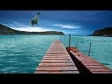 ФУТАЖ Море, причал, дельфин - Footage Sea, pier, Dolphin