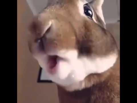 Как жует заяц в замедленной скорости? Это интересно!
