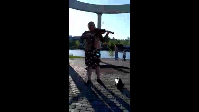 скрипачка вечная любовь