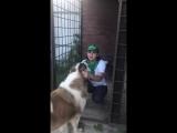 Обращение Лилии Беловой по поводу пострадавшей собаки