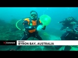 Watch Scuba diving lesson turns into shark rescue effort