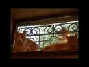 гостиница для кошек МяуСити фото Рысик и Персик