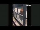 Лев задушил смотрителя в китайском зоопарке