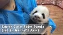 Super Cute Baby Panda Lies In Nanny's Arms iPanda