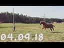 Весёлая Бабай😄 Играем в догонялки? Работа на вожжах. 04.09.18 by SvetlanaBabai
