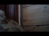 Кот Лео самостоятельно открывает дверь